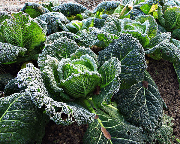 Gardening in September is all about preparing for frost