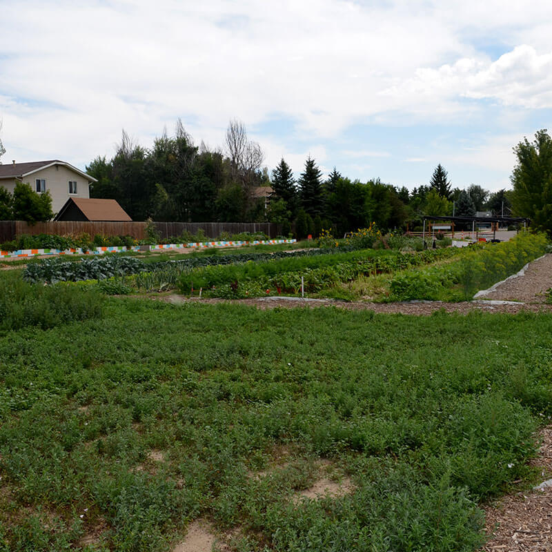 Food Project Farm | YMCA of Boulder Valley